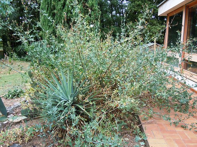 (26) le jardin privé d'un collectionneur 7romne10