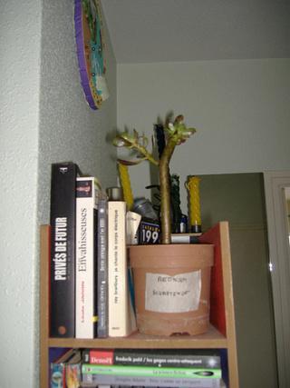 associer diverses succulentes 862