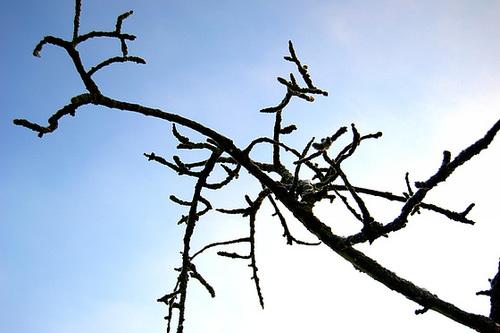 un arbre en hiver - résultats 8mealo10