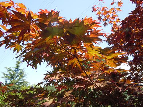 (26) Le Jardin des Sables - un arboretum de passionnés - Montvendres 9_510