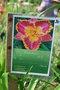 Hemerocallis - des variétés - Page 3 9bis-k10