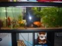 votre aquarium ou votre bassin - Page 2 P1020110
