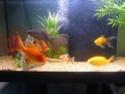 votre aquarium ou votre bassin - Page 2 P1020111