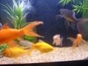 votre aquarium ou votre bassin - Page 2 P1020112