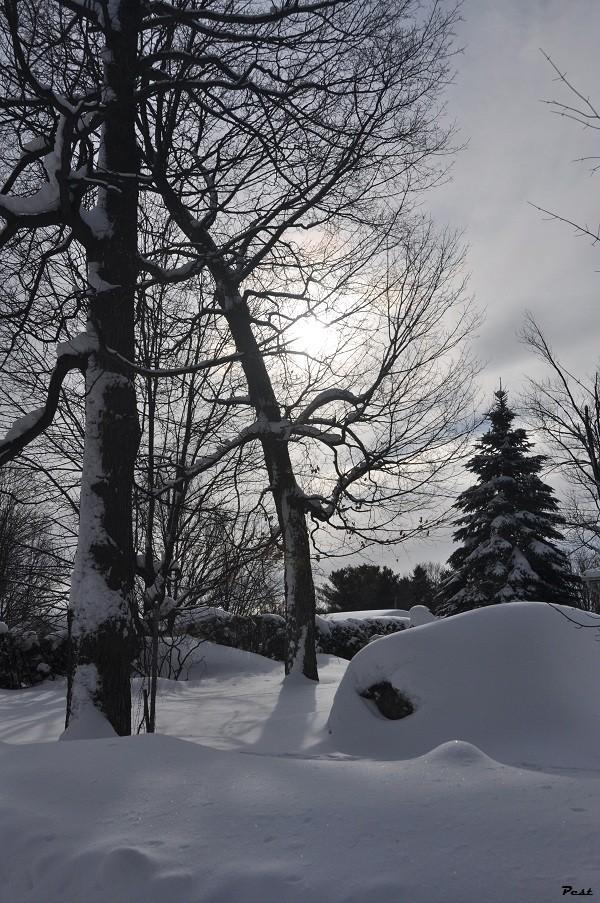 Bon Jeudi Snow_s15