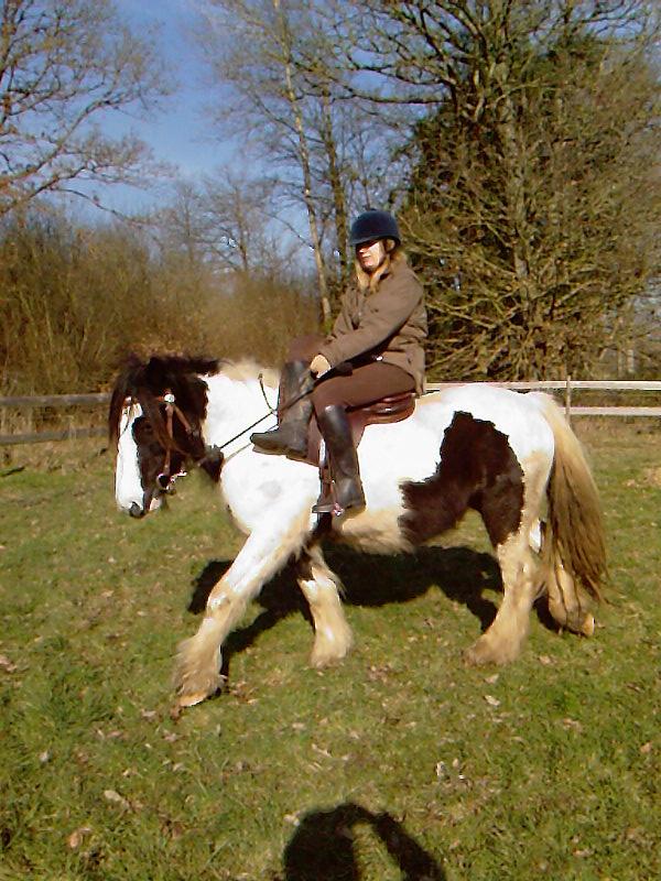 Le Gypsy Cob un Cheval polyvalent! Cours_11