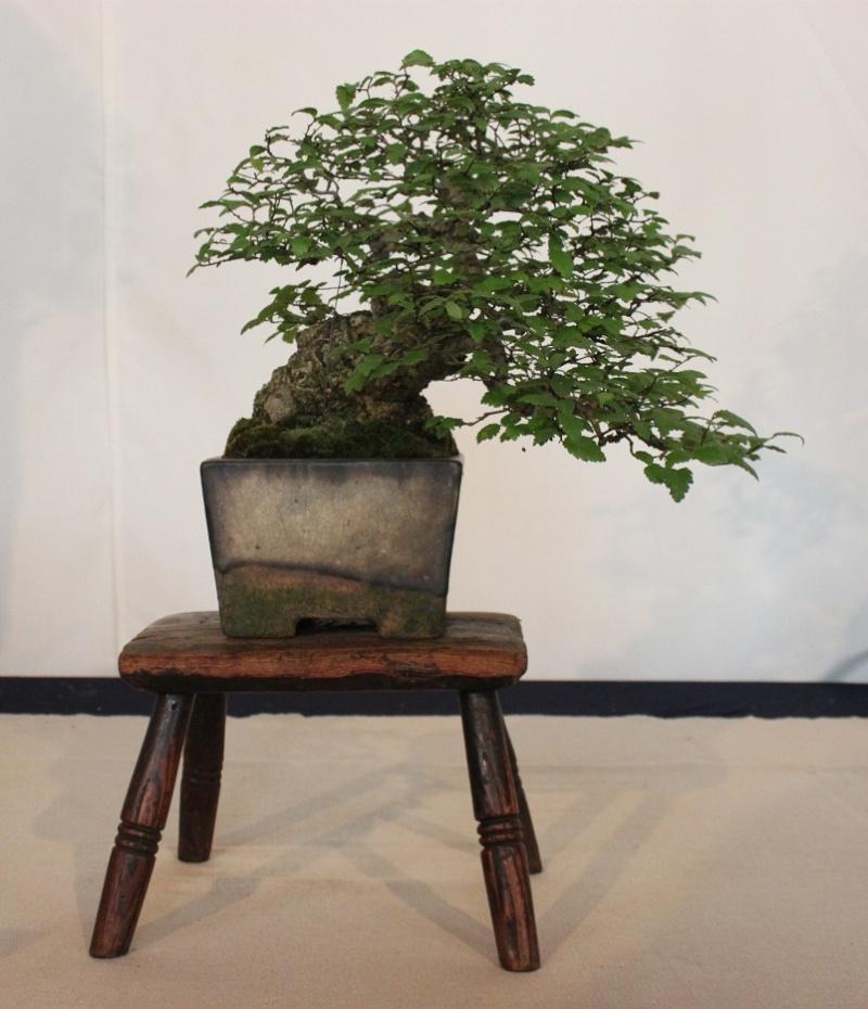 Antique (Non Bonsai) Tables for Bonsai 032cop10