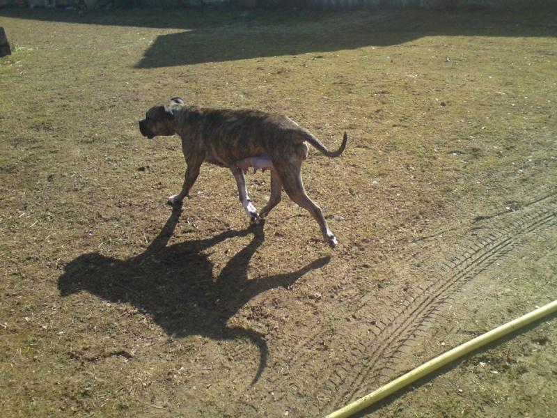 """Evolution """"physique"""" de vos chiens 43231910"""