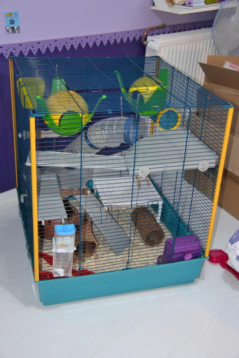 Vends Cage Furet XL en RP Dsc_0611