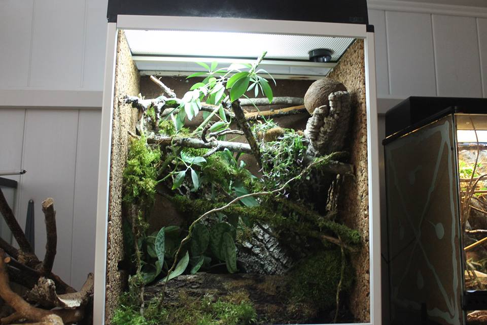 Questions gecko à crête  Ciliat11