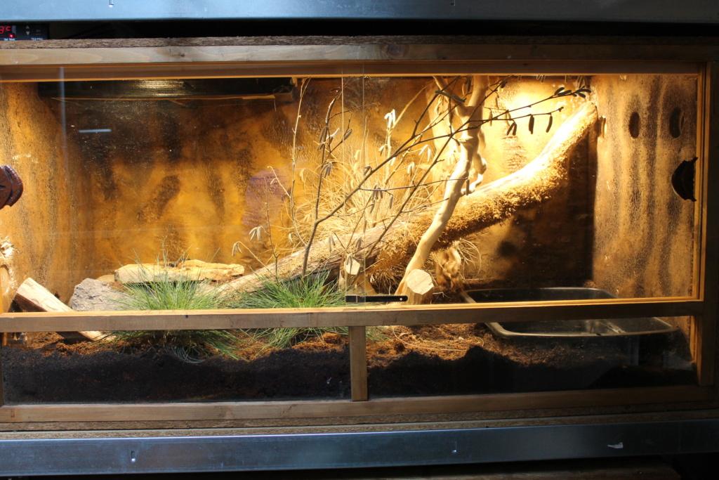 terrarium ou rack (aménagement pour une P. guttatus) Img_4010