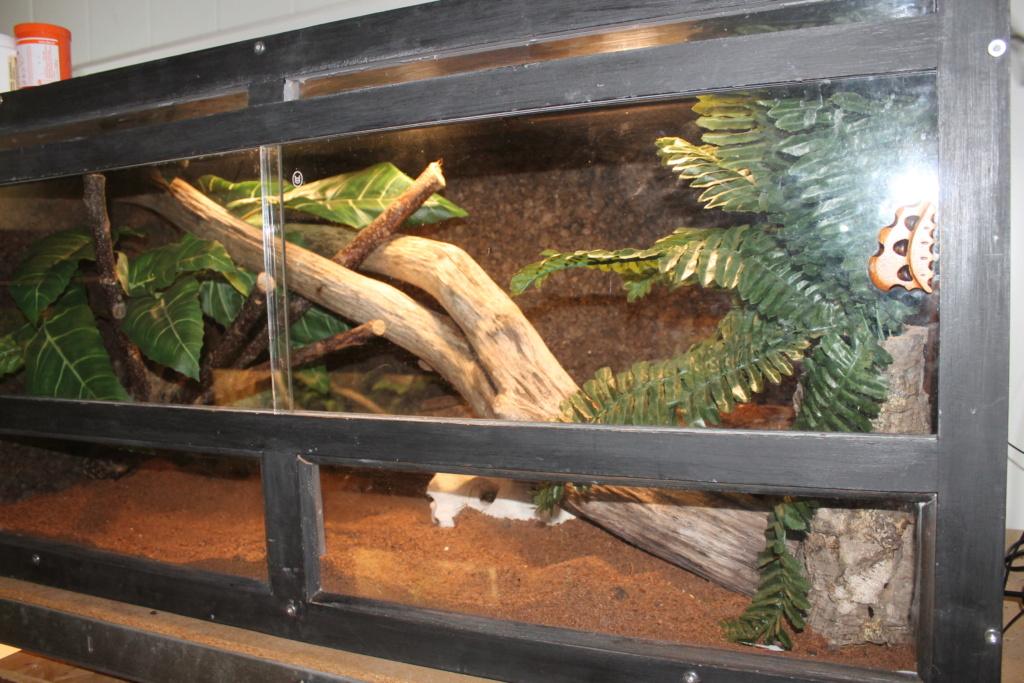 terrarium ou rack (aménagement pour une P. guttatus) Img_4613