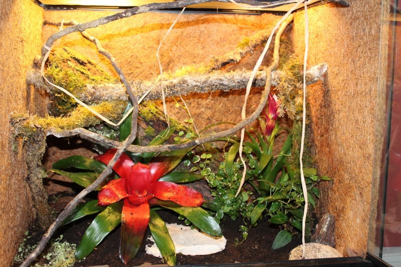 Création de mon premier Terra Tropical humide pour  Ciliatus Terra_13