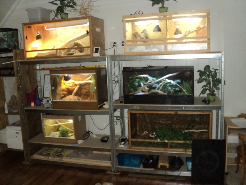 Projet terrarium morelia viridis  Terras10