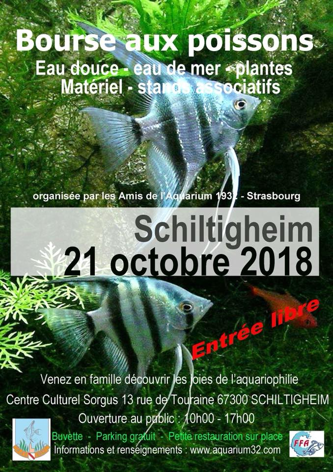 Bourse Schiltigheim (67) - 21 octobre 2018  21_oct10