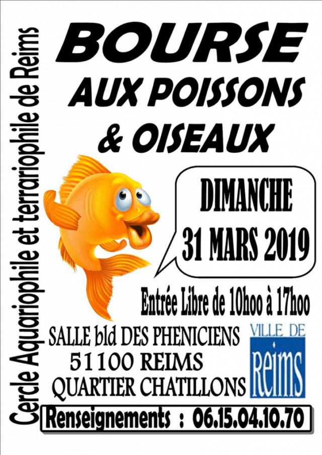 Bourse Reims (51) - aux poissons et aux oiseaux - 31 mars 2019 Bourse10