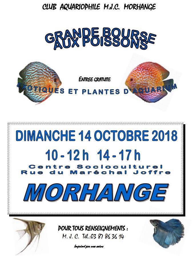 Bourse Morhange (57) - 14 octobre 2018  Morhan10