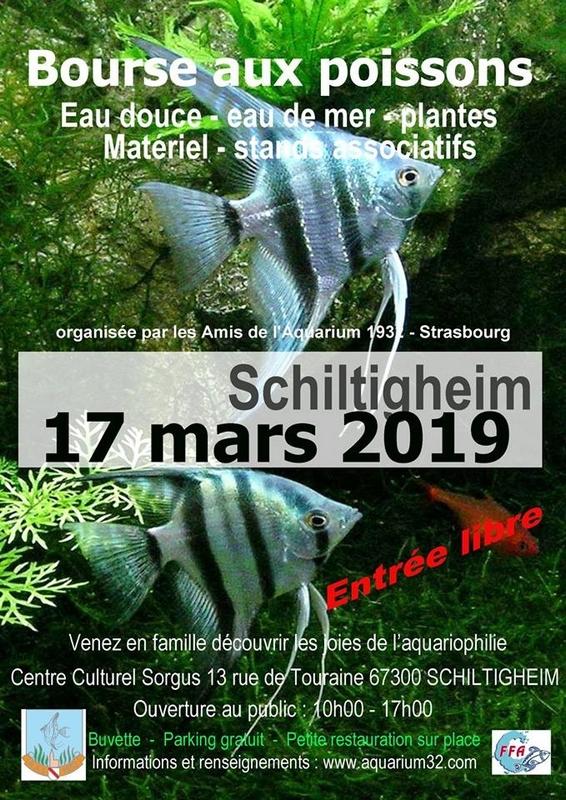 Bourse Schiltigheim (67) - 17 mars 2019 Schilt10