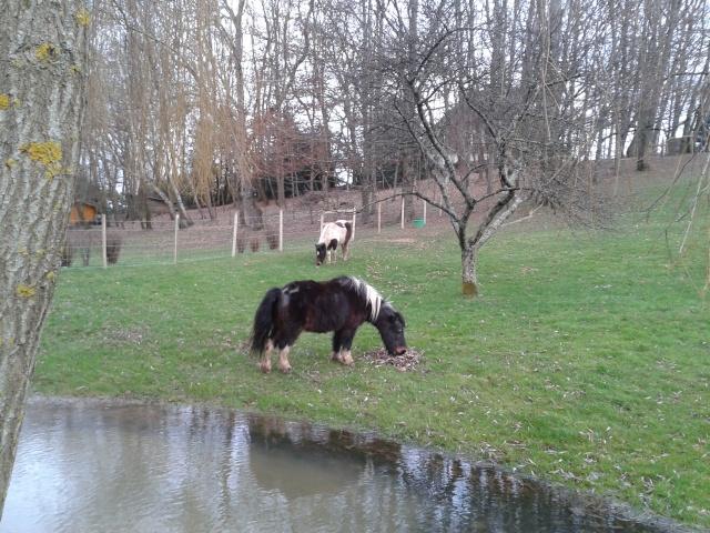 PRUNELLE - ONC poney née en 1986  - adoptée en octobre 2012 par Prosper - Page 4 2012-111