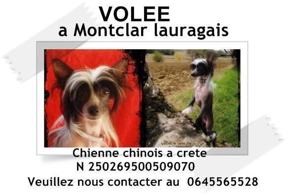 Chienne du Fofo! PERDUUUU!!!!!!!!!  22676510