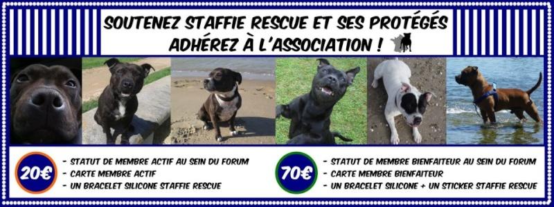 Pourquoi Staffie rescue? 73486610