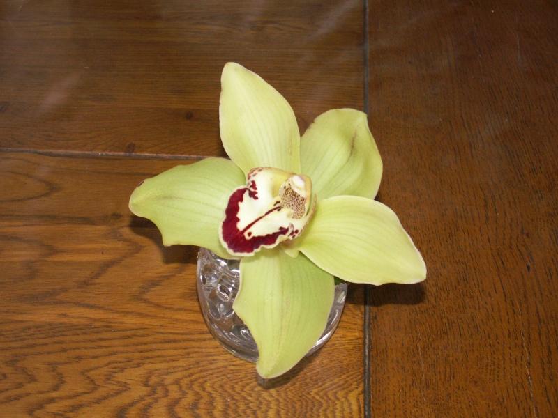 Orchidées - Culture en pot de verre Pict0917