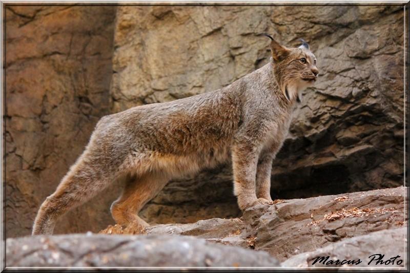 Biodome (1) Lynx Img_9710