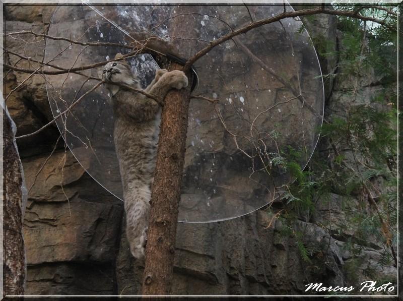 Biodome (1) Lynx Img_9711