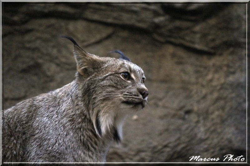 Biodome (1) Lynx Img_9712