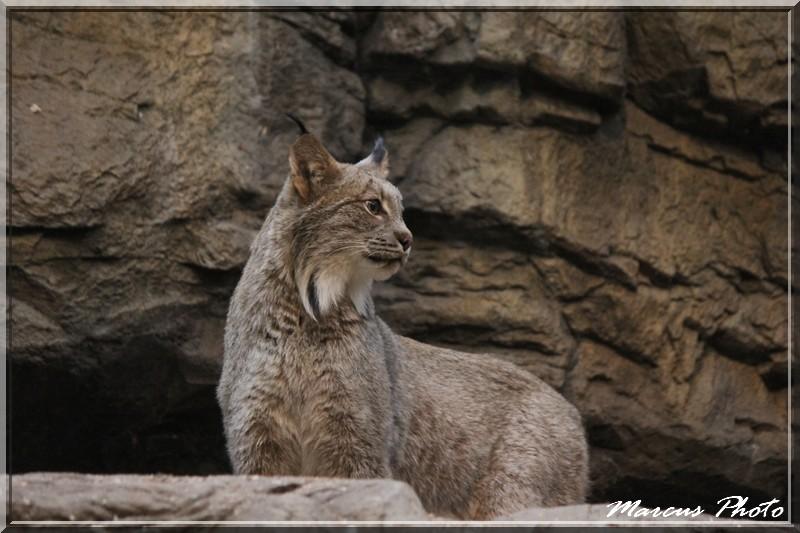 Biodome (1) Lynx Img_9713
