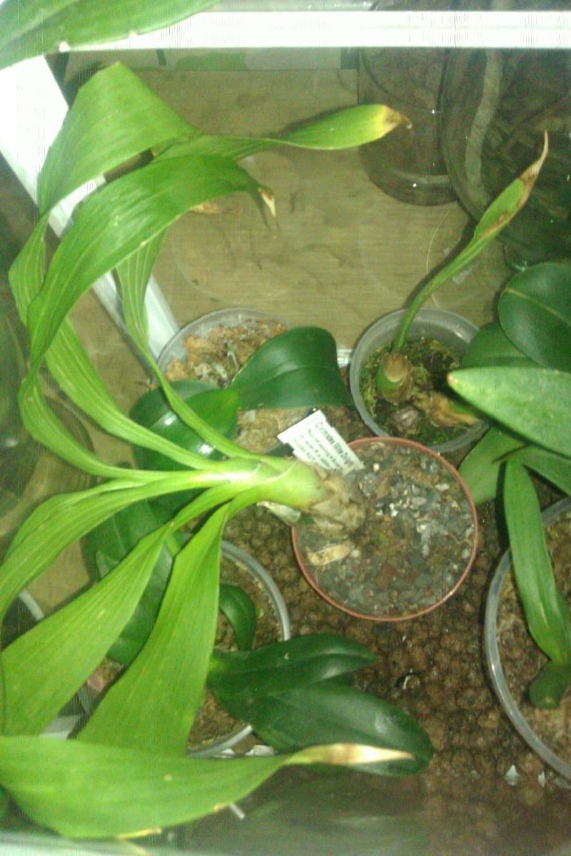 Uprawa wazonowa w keramzycie - Page 3 Imag0122