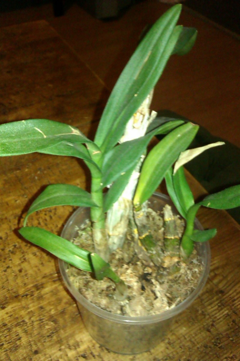 Uprawa wazonowa w keramzycie - Page 3 Imag0126