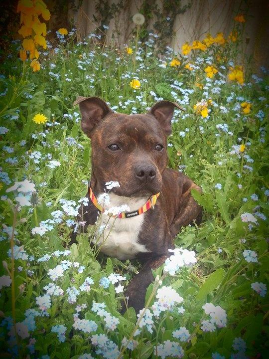 à Adopter chien Famass - 3 ans [Adopté] Famass10