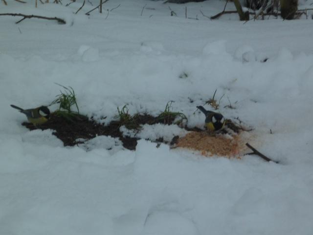 pèche d'hiver Sam_1331