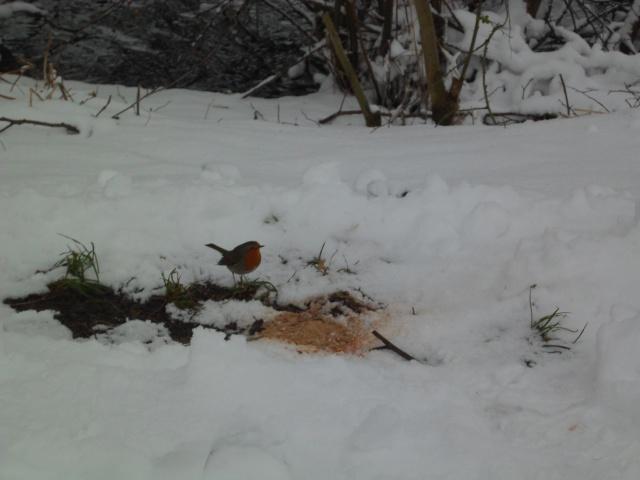 pèche d'hiver Sam_1332