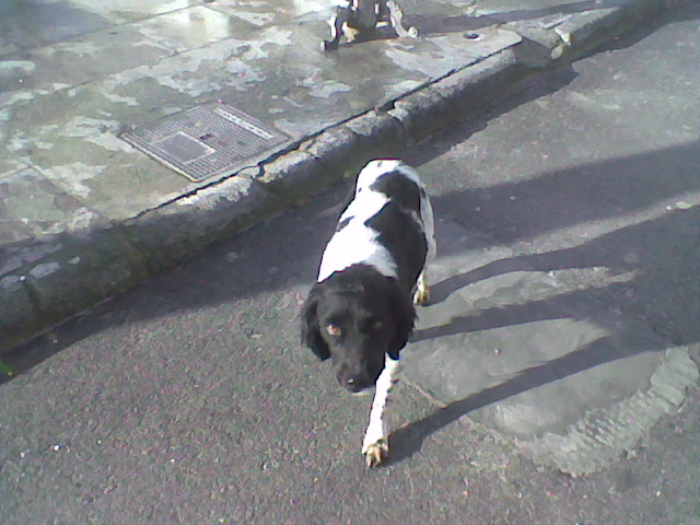 Two lovely dogs roaming Galera Stray410