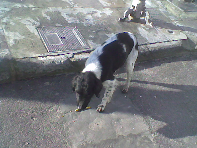 Two lovely dogs roaming Galera Stray510