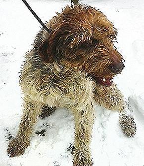 Hund in Dötlingen gefunden Landkr11
