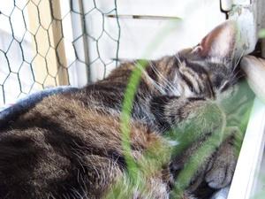 Chat qui dort et qui veille..fleur 100b5610