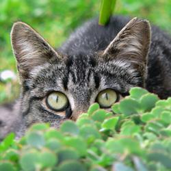 Dressage de chat fleur Interp10