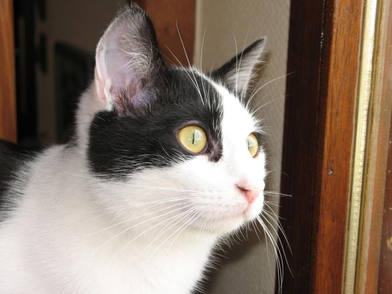 Gepetto, chaton mâle noir et blanc, né le 12 juillet 2011 - Page 1 Gepett10