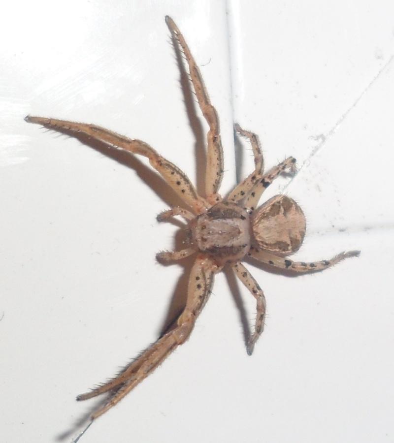 Une petite araignée Sam_0510