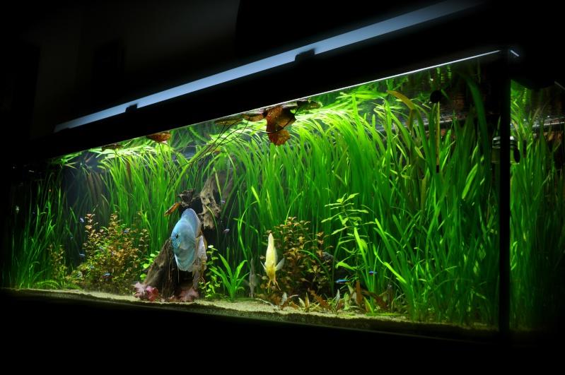 Lancement aquarium 600litres aquatlantis - Page 9 Dsc_0038