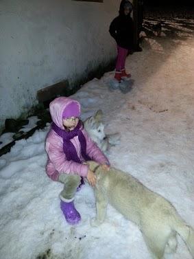 Tr:Notre séjour féerique parmi les rennes et les chiens de traineau...... - Page 2 20121222