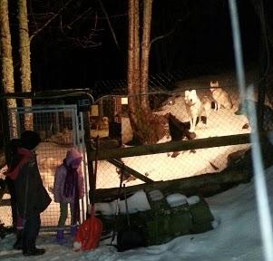 Tr:Notre séjour féerique parmi les rennes et les chiens de traineau...... - Page 2 20121224