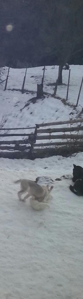 Tr:Notre séjour féerique parmi les rennes et les chiens de traineau...... - Page 2 20121233