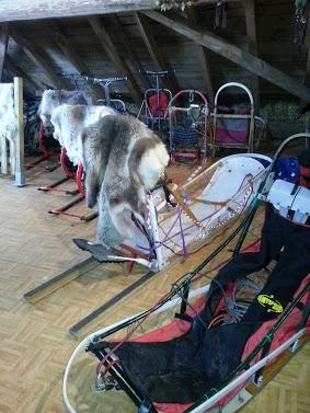 Tr:Notre séjour féerique parmi les rennes et les chiens de traineau...... - Page 2 20121239
