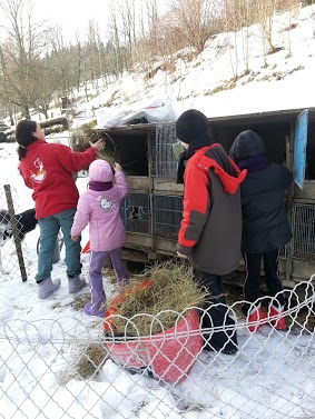 Tr:Notre séjour féerique parmi les rennes et les chiens de traineau...... - Page 2 20121241