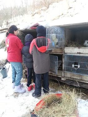 Tr:Notre séjour féerique parmi les rennes et les chiens de traineau...... - Page 2 20121242