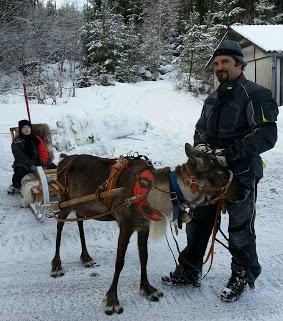 Tr:Notre séjour féerique parmi les rennes et les chiens de traineau...... - Page 2 20121247